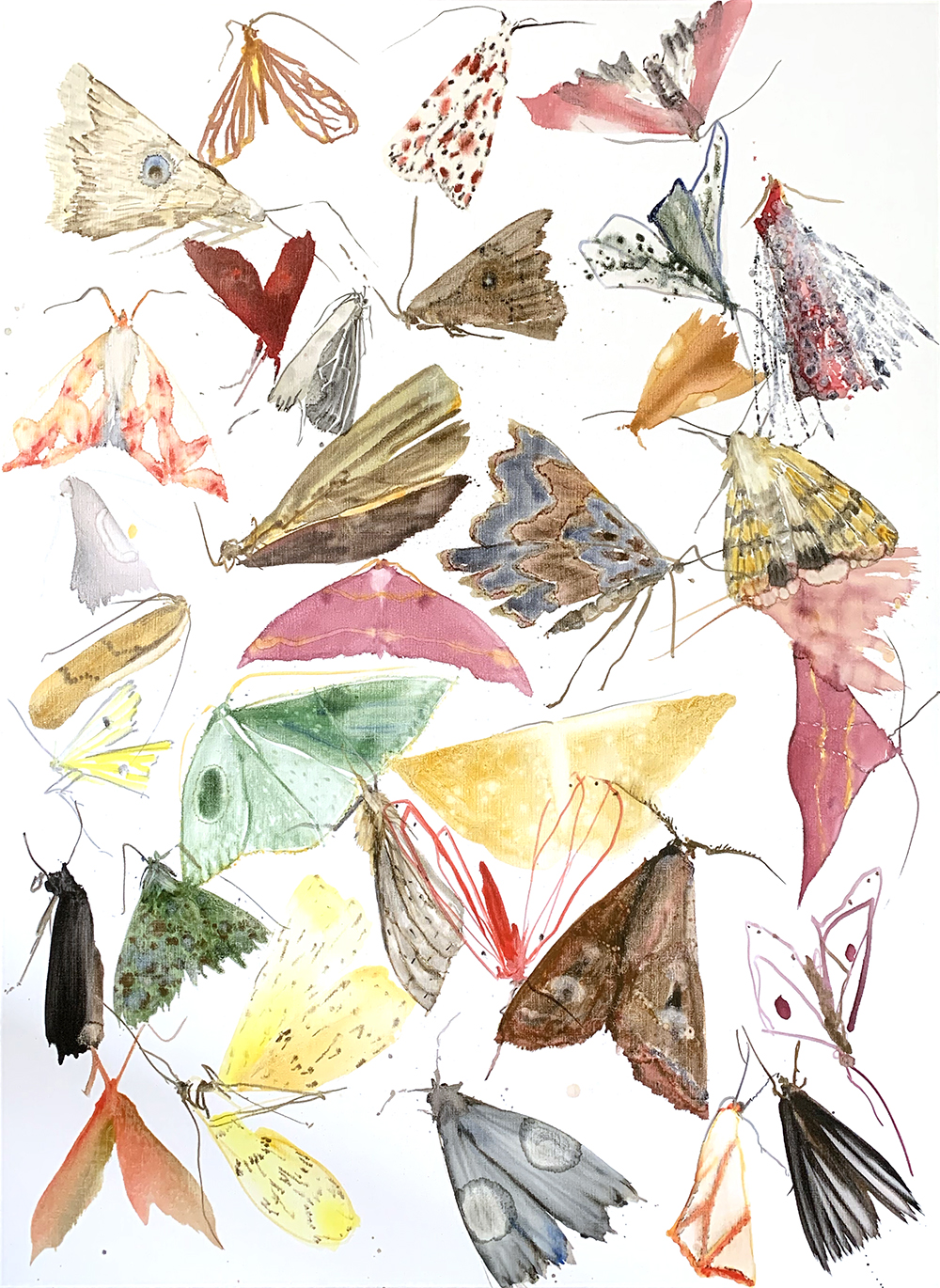 moths - metamorphosis 1