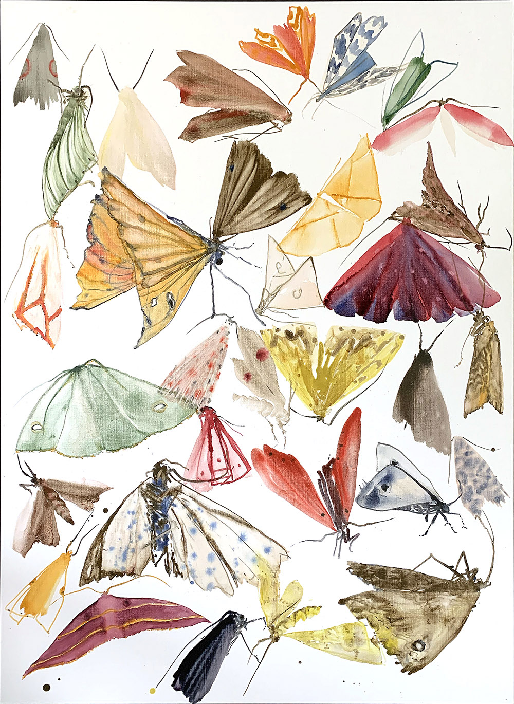 moths - metamorphosis 4