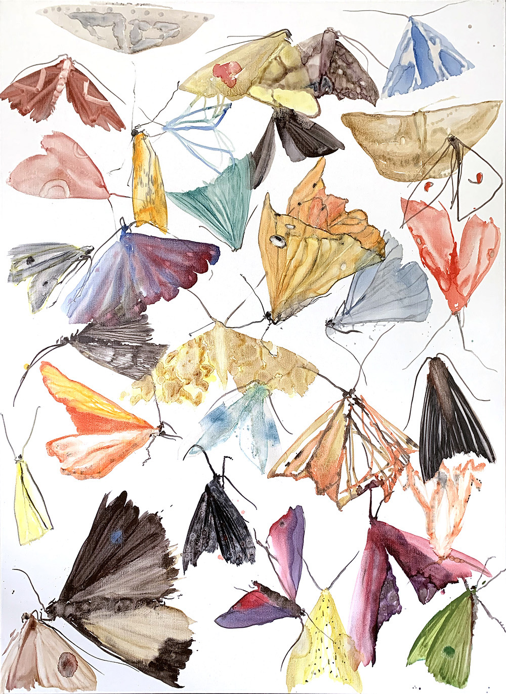 moths - metamorphosis 5